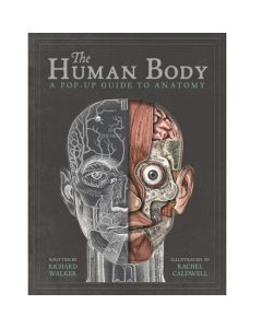 The Human Body Pop Up Book